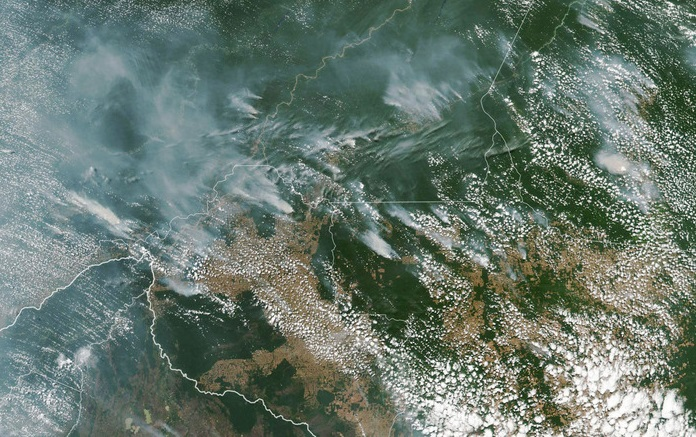 Tại sao rừng Amazon bị cháy?